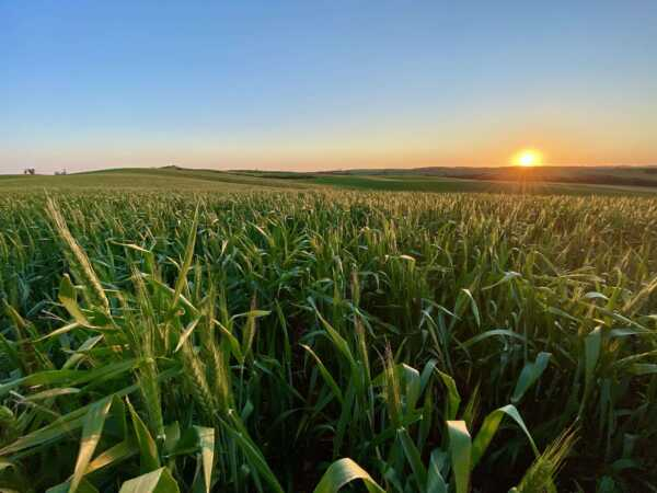 Expansive cropping holding on Eyre Peninsula for sale after four generations